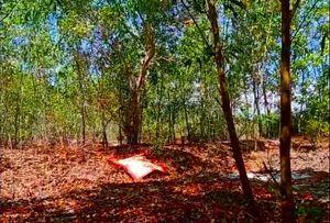 Kinh hãi phát hiện thi thể treo cổ trong rừng tràm: Trưng cầu giám định tử thi