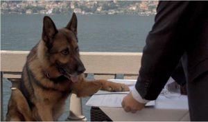 Chú chó giàu nhất thế giới, sở hữu khối tài sản gần... 400 triệu USD