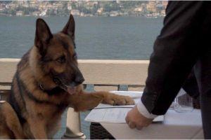 Sự thật đáng kinh ngạc về 'gia tộc nhà chó' giàu nhất thế giới
