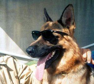 'Gia tộc' chó giàu nhất thế giới: Sở hữu tài sản kếch xù, ở biệt thự sang chảnh