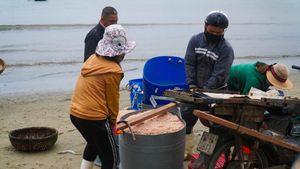 Ngư dân Đà Nẵng vào mùa ruốc kiếm tiền triệu mỗi ngày