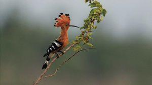 Khám phá những loài chim xinh đẹp ngỡ ngàng