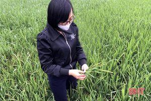 Thời tiết 'ẩm ương', Sở NN&PTNT Hà Tĩnh 'khuyên' gì để phòng trừ dịch hại cây trồng?