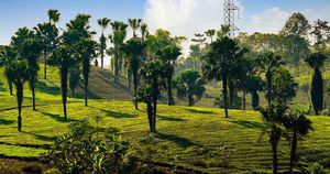 Cao tốc Nội Bài – Lào Cai qua Phú Thọ sẽ được trồng cọ để quảng bá văn hóa địa phương