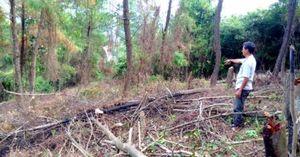 Giám đốc lâm trường để dân lấn chiếm đất rừng được bổ nhiệm lại