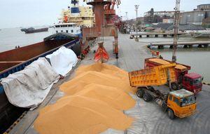 Nhập khẩu đậu tương của Trung Quốc sẽ tăng mạnh trong năm nay