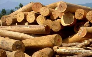 Nhiều tiềm năng xuất khẩu gỗ vào thị trường Pháp