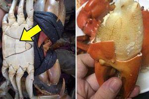 Mua cua cứ nhắm điểm này trên yếm, đảm bảo 100% thịt 'ngập răng', gạch vàng óng
