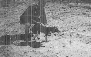 Thí nghiệm khủng khiếp của CIA những năm 1960 nhằm tạo ra chó 'điều khiển từ xa'