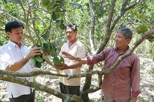 Xây dựng vùng sản xuất, gắn phát triển chuỗi giá trị nhóm sản phẩm nông nghiệp chủ lực