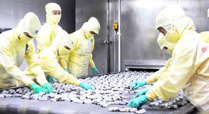 ĐBSCL: Xuất khẩu tôm vào thị trường châu Âu tăng mạnh