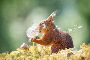 Những khoảnh khắc đáng yêu của các loài động vật khiến bạn bật cười