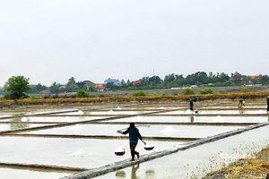 Cam Ranh: Tăng cường sản xuất muối niên vụ 2021