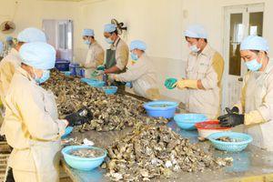 Doanh nghiệp tiên phong nuôi hàu biển tại Vân Đồn