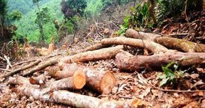 Phạt gần 38 triệu đồng đối tượng chặt phá 2.500m2 diện tích rừng của người dân