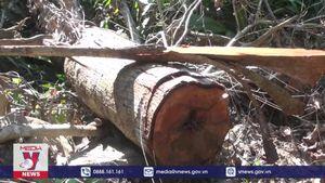 Phú Yên khởi tố cán bộ lâm nghiệp và Ban quản lý Rừng phòng hộ Sông Hinh