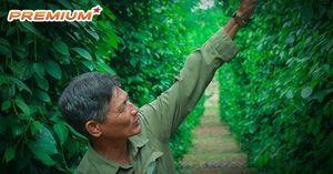 Bài học lên đỉnh, xuống đáy của 'vàng đen' Việt Nam