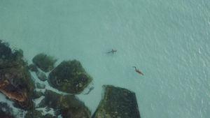 Bị cá mập rượt đuổi, cá sấu thoát chết trong gang tấc