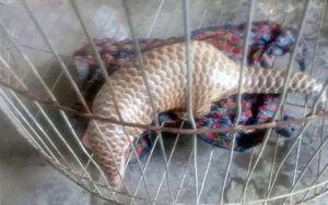 Người dân Bình Định giao nộp động vật quý hiếm để thả về tự nhiên