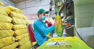 Năm doanh nghiệp tại Mỹ đăng ký bảo hộ thương hiệu gạo ST25