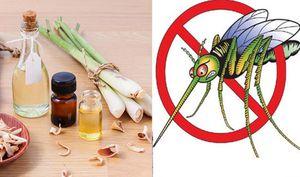 Loạn giá tinh dầu đuổi muỗi