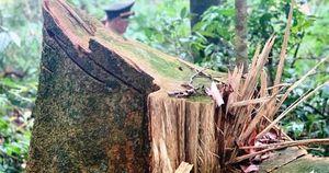 Vụ 'cắt xén' tiền bảo vệ rừng ở TT-Huế: Tiền chi trả cho dân đi đâu?
