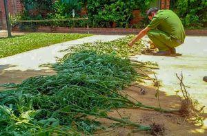 Người phụ nữ trồng cần sa trong vườn để chữa mất ngủ