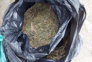 Bắt hai đối tượng vận chuyển, mua bán gần 5 kg cần sa khô