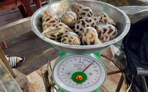 Vụ ốc hương 1,8 triệu đồng/kg: Chủ nhà hàng bị phạt hơn 13 triệu đồng