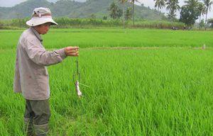 Thái Bình: Vướng phải dây điện trần bẫy chuột trên đồng, một nam thanh niên tử vong