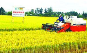 Tính toán mua lại bản quyền giống lúa ST25