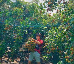 Miệt vườn trái cây nào lớn nhất miền Tây?