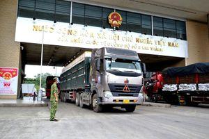 Xuất khẩu 3.400 tấn vải thiều sớm qua cửa khẩu Kim Thành