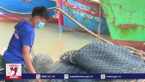 Ngư dân Hoàng Mai, Nghệ An ra khơi sau thời gian giãn cách