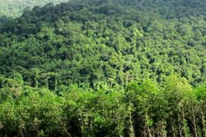 Khẩn trương xây dựng phương án quản lý rừng và đất rừng