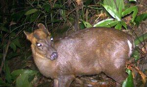 Phát hiện nhiều động vật hoang dã hiếm thấy ở Thừa Thiên- Huế