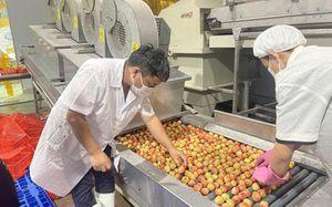 Nông sản Việt Nam định danh trên nhiều thị trường