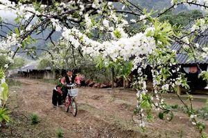 Sắc hoa trên cao nguyên Mộc Châu
