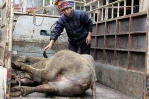 Lào Cai chịu thiệt hại nặng từ các đợt rét đậm