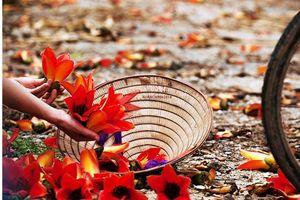 Ghé thăm mùa hoa gạo đỏ rực một góc trời