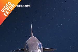 Hình thù kỳ dị của loài cá đuôi chuột ở các vùng băng giá