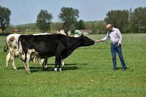 Chọn sữa hữu cơ : Không chỉ theo 'trend' mà còn phải theo chuẩn