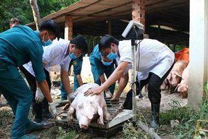 Cả ngàn tỉ đồng, dùng cả quỹ nâng lương để chống dịch tả lợn châu Phi