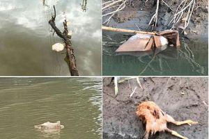 'Chống' lệnh UBND tỉnh, Công ty cấp nước Nghệ An ngang nhiên bơm nước sông Đào?