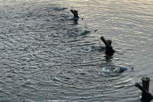 Đà Nẵng lắp hệ thống sục khí ở hồ xảy ra tình trạng cá chết hàng loạt