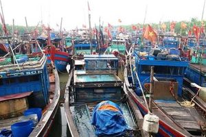 Thanh Hóa: 100% tàu thuyền đã neo đậu an toàn