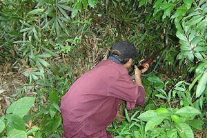 Bắn nhầm vì tưởng thú rừng, 'thợ săn' khiến người cùng làng thương tật 93%