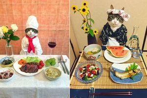 Chú mèo nổi tiếng khoe món ăn khiến con người 'thèm nhỏ dãi'