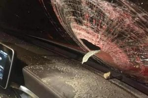 Sứt trán, vỡ kính lái vì bị ném đá trên cao tốc Hà Nội - Thái Nguyên