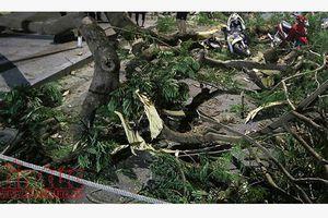 Mưa lớn kèm gió lốc làm đổ cây xanh, hư hỏng nhiều ô tô tại Lâm Đồng